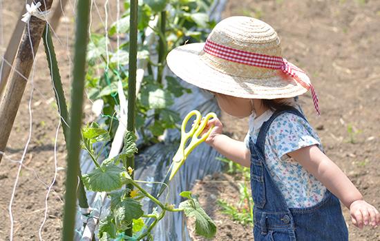 夏野菜収穫体験&庭遊び